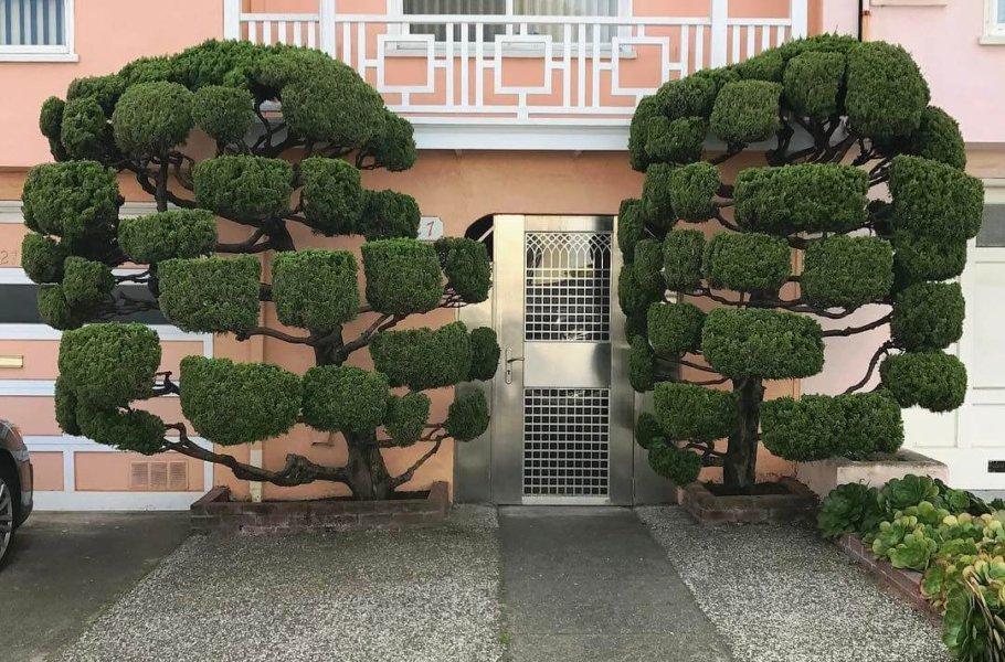 Kelsey Trees