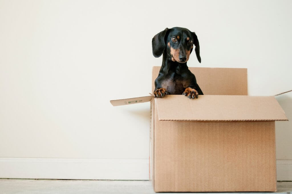 How to Manage Moving Home When You Work from Home as a Creative